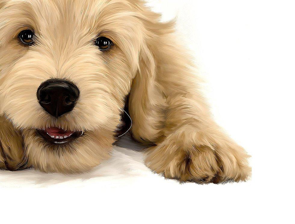 The Goldendoodle Registry – Registry and Pedigree Service for Goldendoodles